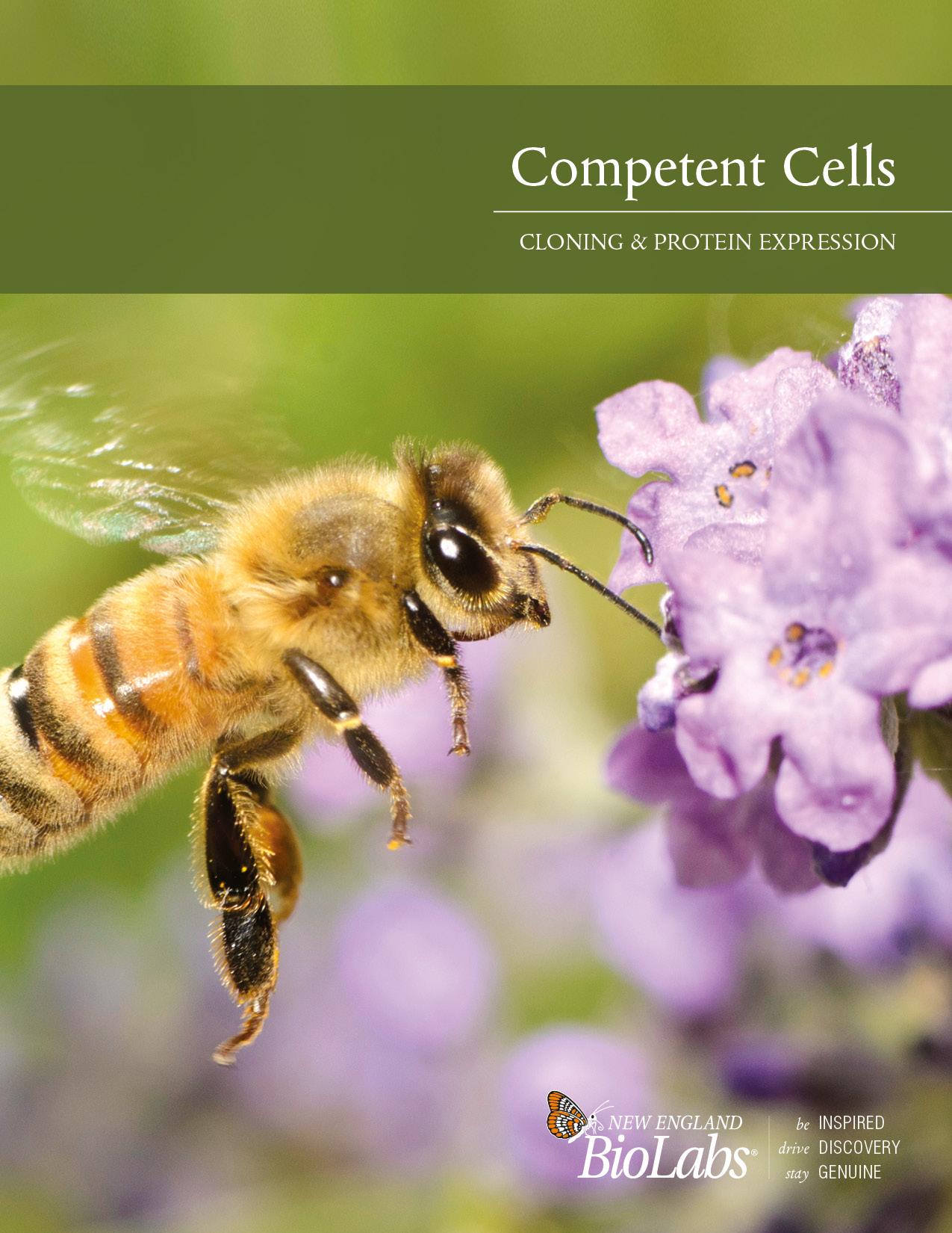 Kompetente Zellen Broschüre