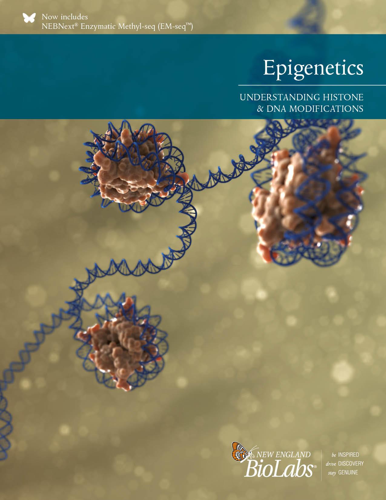 Epigenetik Broschüre