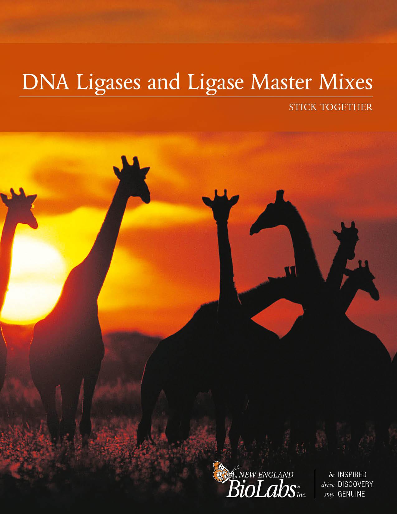 DNA Ligase Brochure