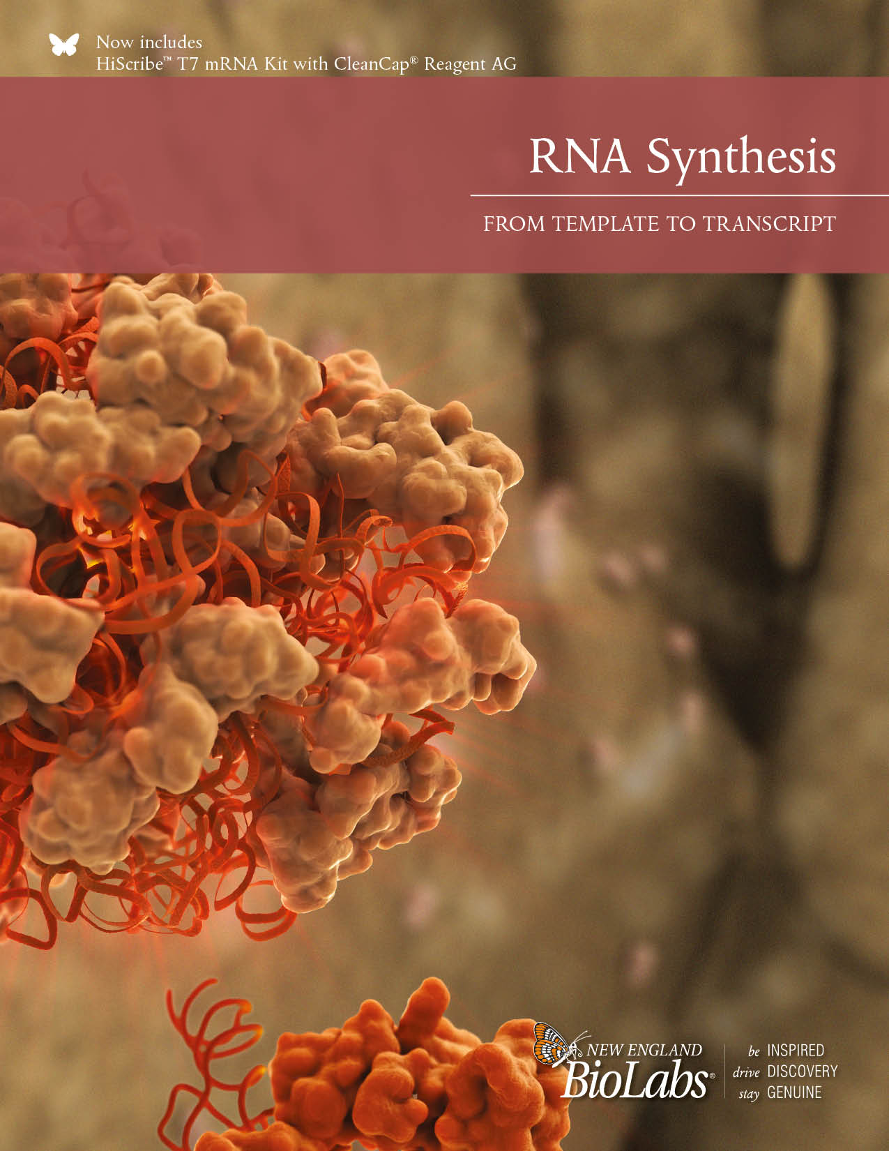 RNA Synthesis Broschüre