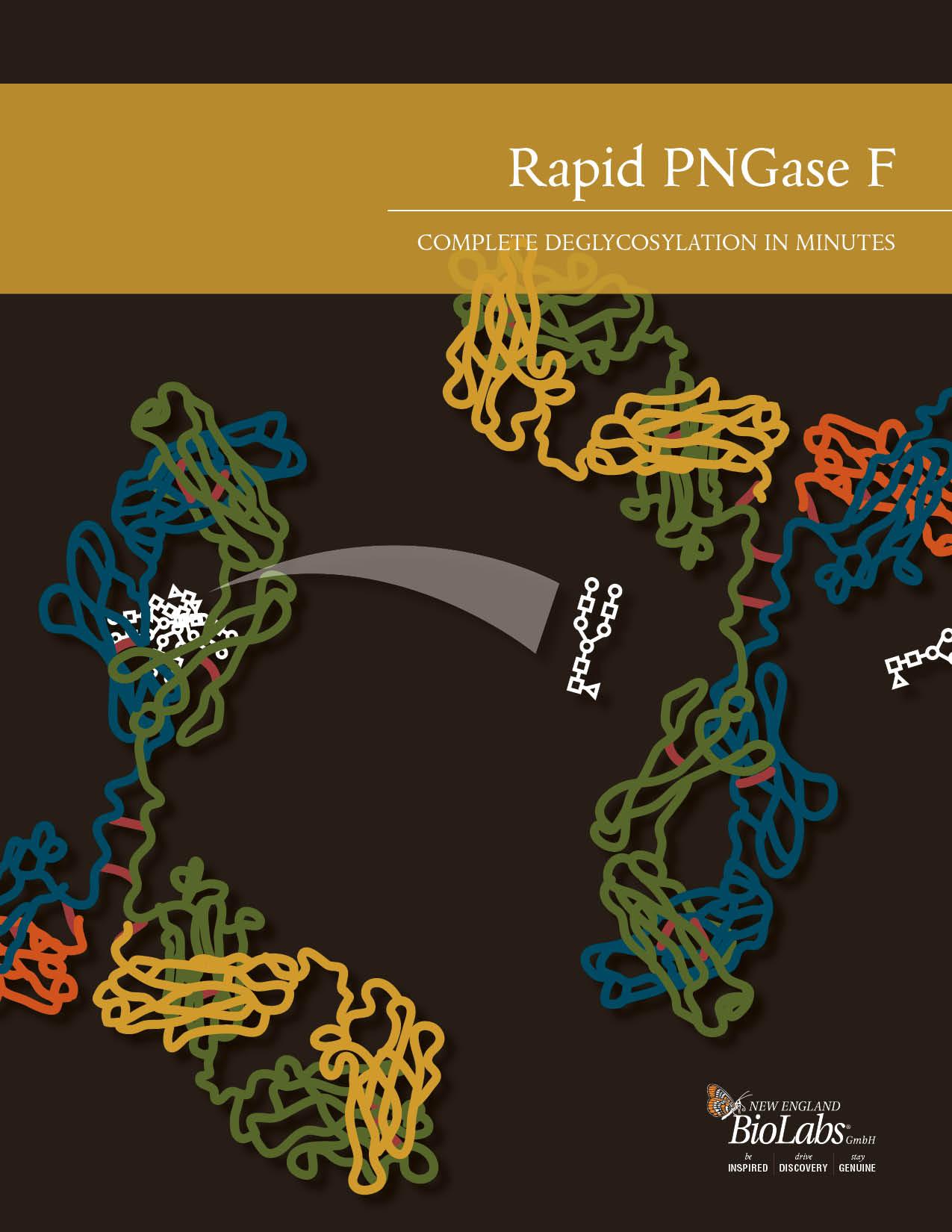 Rapid PNGase F Broschüre