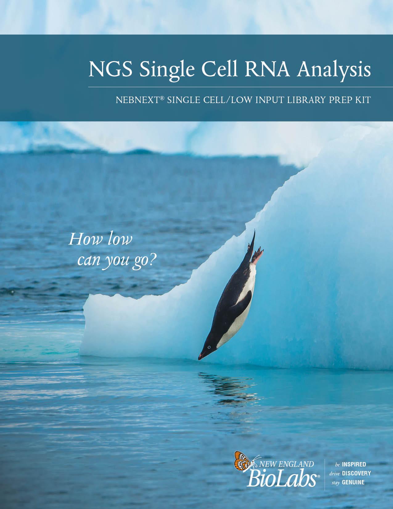 NEBNext Single Cell Analysis