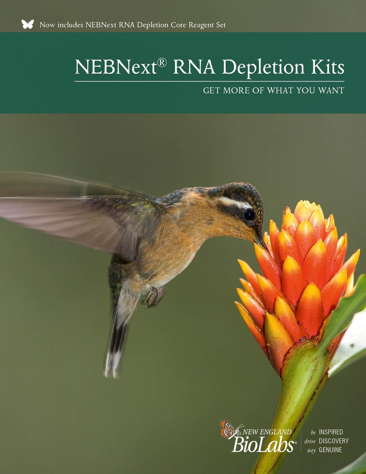 NEBNext RNA Depletion Broschüre