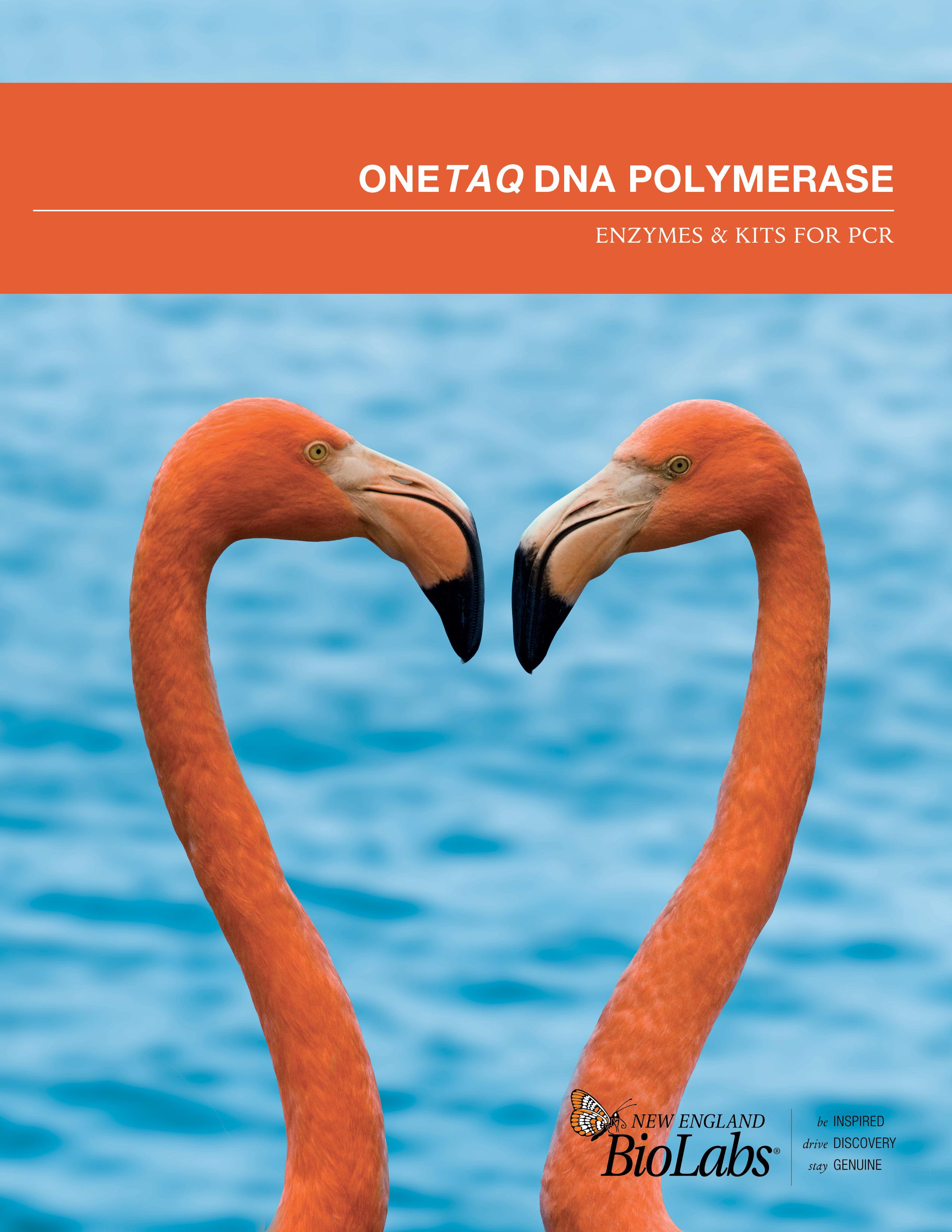 OneTaq DNA Polymerase Broschüre