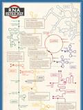 RNA Metro Map Poster