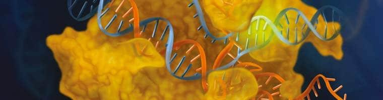 Genome Editing CRISPR Cas9