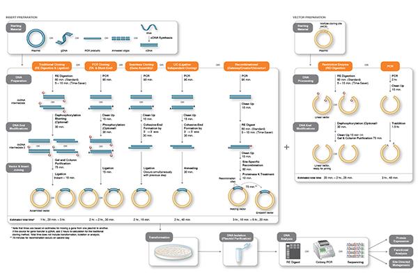 Klonierung Workflows - Cloning Workflows