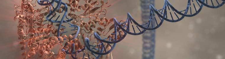 NEB_PCR_Header