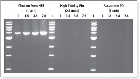 Phusion DNA Polymerase Gelbild