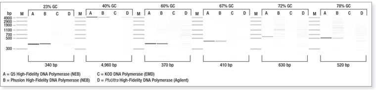 Q5 DNA Polymerase polymerases comparison