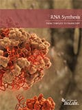 RNA Synthesis Brochure