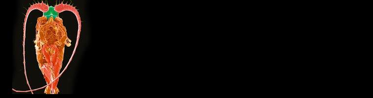 Biolux Luciferase Banner