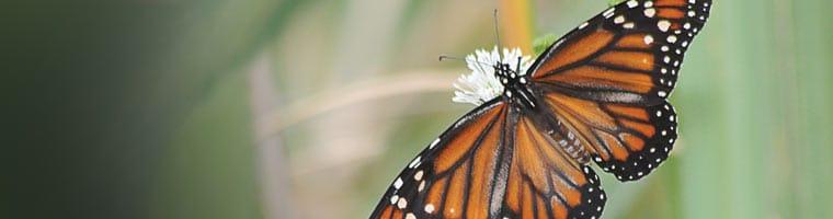NEB Monarch RNA Miniprep Kit
