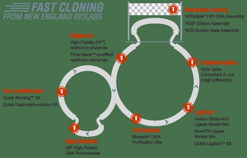 Fast Cloning Reagenzien