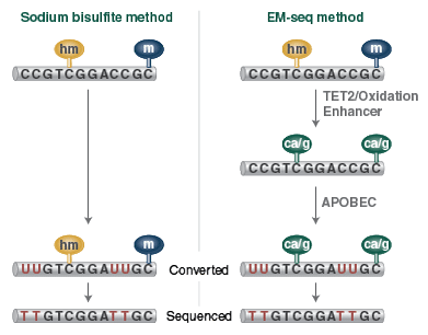 EM Seq vs. Bisulfite Sequencing