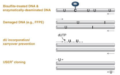 Q5U High Fidelity Polymerase Applications