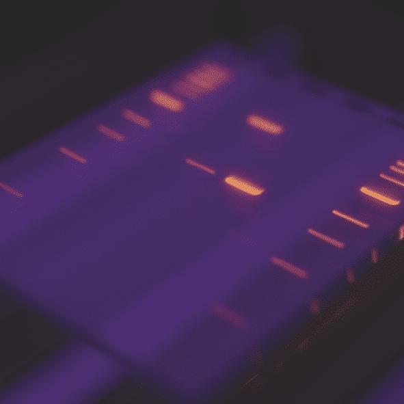 NEB DNA Ladders 3 für 2