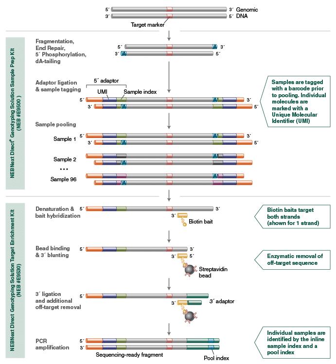 Genotyping Solution Workflow