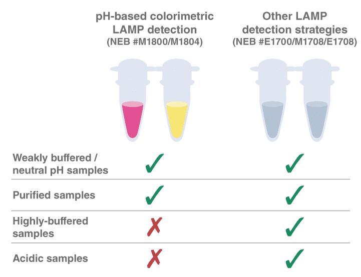 pH-Wert-abhängige colorimetrische LAMP Detektion